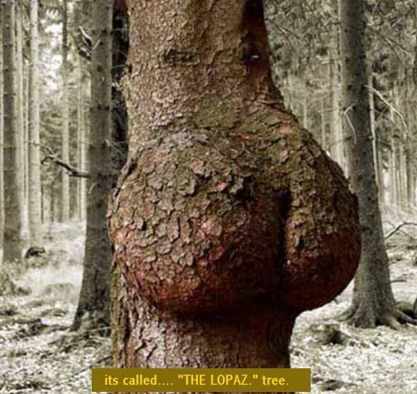 ...влечение к деревьям и другим большим растениям.