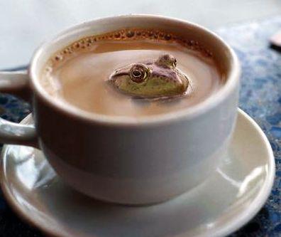 лягушка плавает в кофе