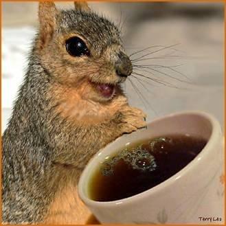 белка любит кофе