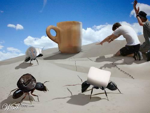 алтарь для кофе