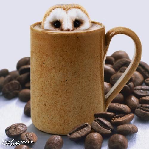 филин в пенке кофе капучино