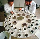 дегустаторы кофе