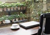 Кофе и садовые растения в горшках