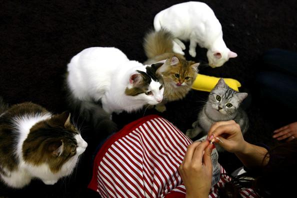 Специальное кафе с котами в Японии cat cafe