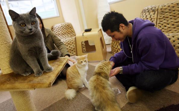 Кафе для котов в Японии cat cafe