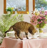 Рыжий кот на столе в кафе