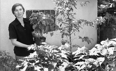 Кофейное дерево растет в Украине