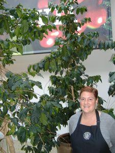 Специалист по выращиванию кофейных деревьев в офисе Старбакс