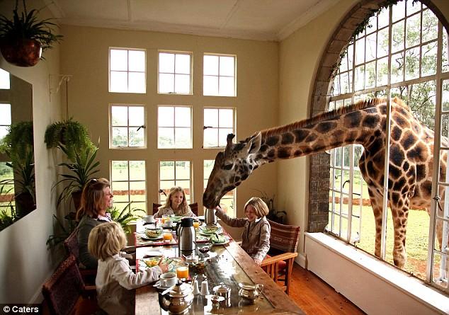 Жираф приходит на завтрак и кофе