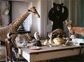 Жираф и компания пришли на кофе