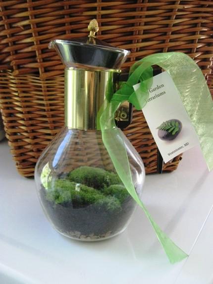 Домашний террариум из стеклянного кофейника